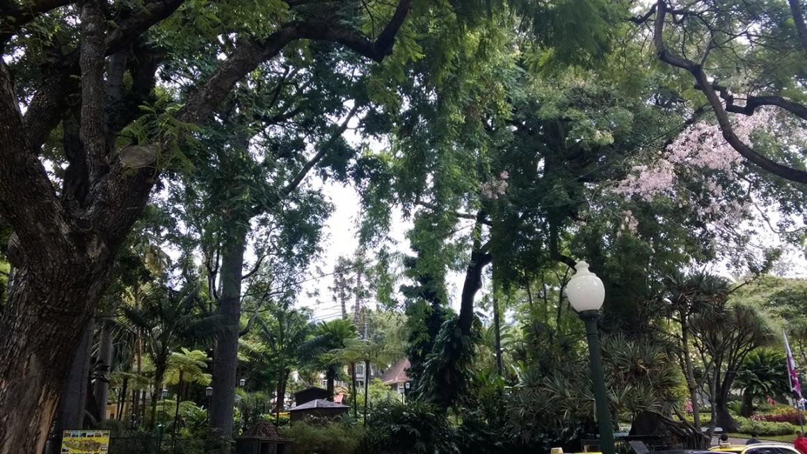 park w środku miasta