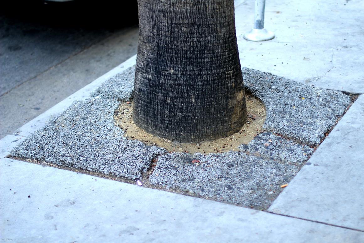 wszystkie drzewa w Hollywood wyglądają własnie tak